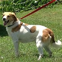 Adopt A Pet :: Marcus - Ashland, KY