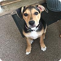 Adopt A Pet :: Kristina - Randolph, NJ