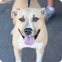Boxer Mix Dog for adoption in Fresno CA, California - Monica