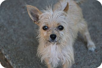 Terrier (Unknown Type, Small) Mix Dog for adoption in Allentown, Pennsylvania - Grace