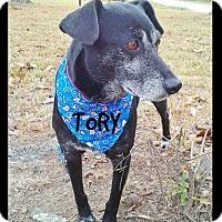 Adopt A Pet :: Tory - Princeton, KY