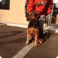 Adopt A Pet :: Camila - Cashiers, NC