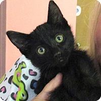 Adopt A Pet :: Casper - Reeds Spring, MO