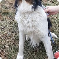 Adopt A Pet :: Buddy - Knoxville, IA