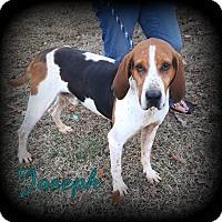 Adopt A Pet :: Joseph - Denver, NC