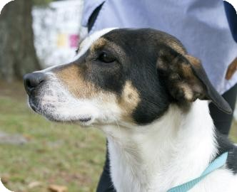 Hound (Unknown Type) Mix Dog for adoption in Gainesville, Florida - Norma Jean