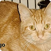 Adopt A Pet :: Margo - Medway, MA