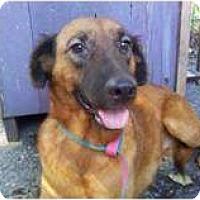 Adopt A Pet :: GIDGET - Houston, TX
