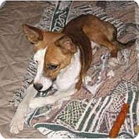 Adopt A Pet :: Vinnie - Scottsdale, AZ