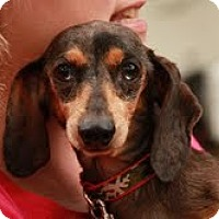 Adopt A Pet :: Norman Tater - Staunton, VA