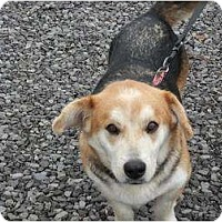 Adopt A Pet :: Bailey - Murfreesboro, TN