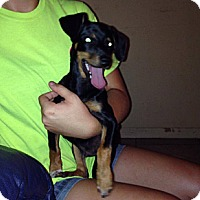 Adopt A Pet :: Tex - Silsbee, TX