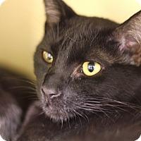 Adopt A Pet :: DeWatt - Chicago, IL
