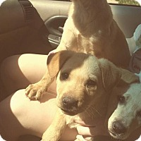 Adopt A Pet :: Echo - Scottsdale, AZ