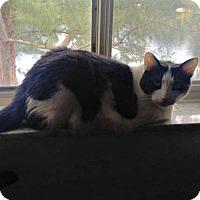 Adopt A Pet :: Jaegar - Coral Springs, FL