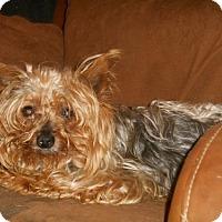 Adopt A Pet :: Buster - Zaleski, OH