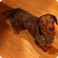 Adopt A Pet :: Chauncey - Decatur, GA