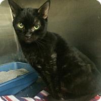 Adopt A Pet :: Suzie - Ogden, UT