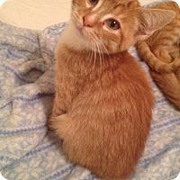 Adopt A Pet :: Ollie - McDonough, GA