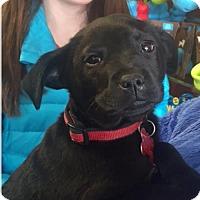 Adopt A Pet :: Sally - Potomac, MD