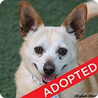 Adopt A Pet :: Chico - Burlingame, CA