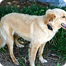 Adopt A Pet :: MAGICAL MERLIN