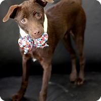 Adopt A Pet :: Sherwood - Dalton, GA