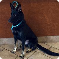 Adopt A Pet :: I'M ADOPTED Cajun Spice Rutkow - Oswego, IL