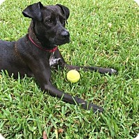 Adopt A Pet :: Freeda - Ft. Lauderdale, FL