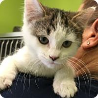 Adopt A Pet :: COCONUT - Hibbing, MN