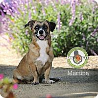 Adopt A Pet :: Martina - Oceanside, CA