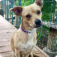 Adopt A Pet :: Barkley - Santa Ana, CA