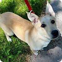 Adopt A Pet :: Sierra - Lakeville, MN