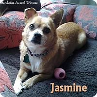 Adopt A Pet :: Jasmine - Sweet natured! - Huntsville, ON