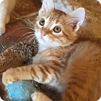 Adopt A Pet :: Leo - McKinney, TX