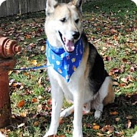 Adopt A Pet :: Luke - Denver, CO