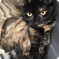 Adopt A Pet :: Annie - Anaheim Hills, CA