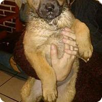 Adopt A Pet :: Jenny - Dana Point, CA