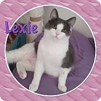 Adopt A Pet :: Lexie - Cedar Springs, MI