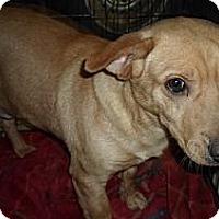 Adopt A Pet :: Scout - Hazard, KY