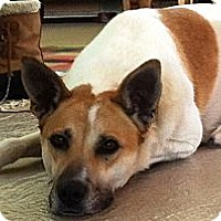 Adopt A Pet :: Sierra - Wasilla, AK