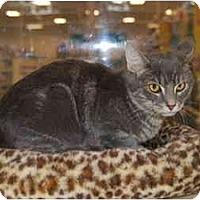 Adopt A Pet :: Fritz - Modesto, CA
