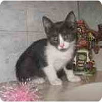 Adopt A Pet :: Cosmo - Catasauqua, PA
