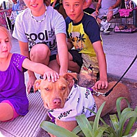 Adopt A Pet :: BELLA - Carpenteria, CA