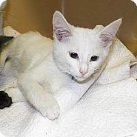 Adopt A Pet :: Carlton - Dover, OH
