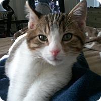 Adopt A Pet :: Sawyer - Long Beach, NY