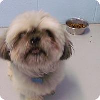 Adopt A Pet :: Kaine - Muskegon, MI