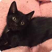 Adopt A Pet :: Franky - East Hanover, NJ