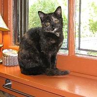 Domestic Shorthair Cat for adoption in Cincinnati, Ohio - zz 'Bebe' courtesy listing