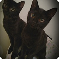Adopt A Pet :: Alexa & Allie - Richmond, VA